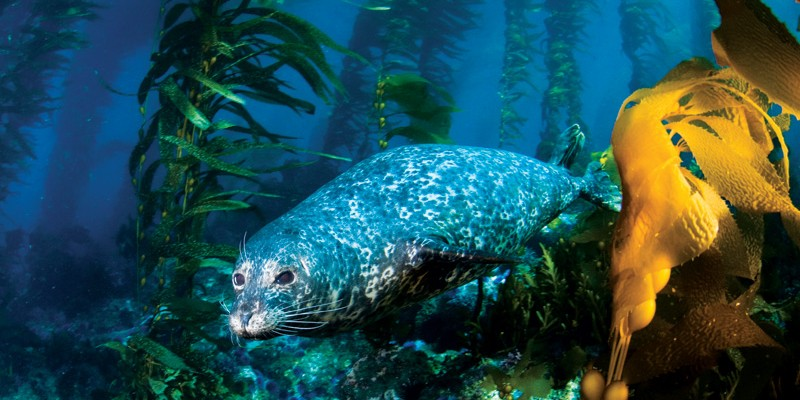 http://aquasafaris.com/wp-content/themes/Paradise/timthumb.php?src=http://aquasafaris.com/wp-content/uploads/2012/02/350-800x400.jpg&w=80&h=50&zc=1